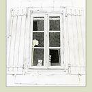 Cat in Window by Mariana Musa