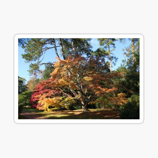 Autumn Beauty in Westonbirt. Sticker