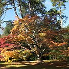 Autumn Beauty in Westonbirt. by John Dalkin