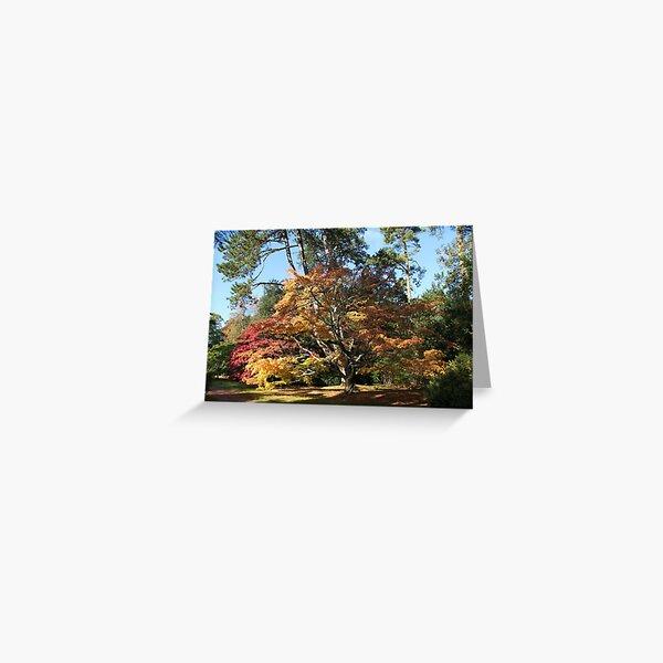Autumn Beauty in Westonbirt. Greeting Card