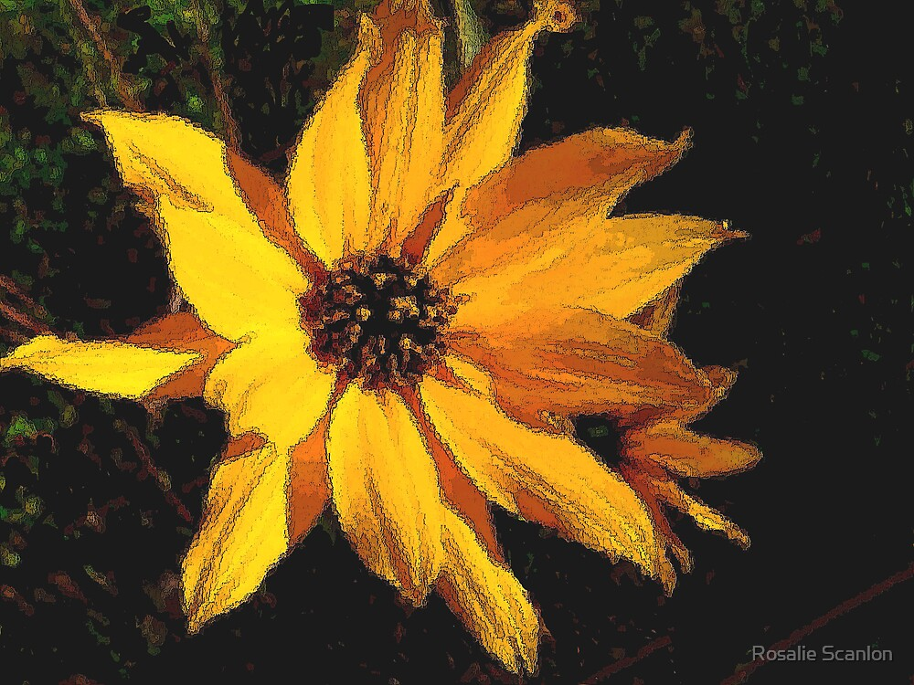 Wild Sunflower by Rosalie Scanlon