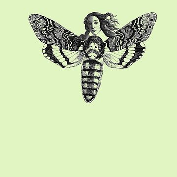 Venus Metamorphosed Into Moth by Zehda