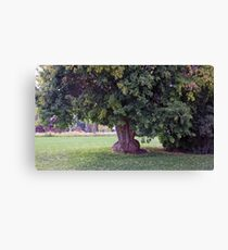 Firmly Planted Canvas Print