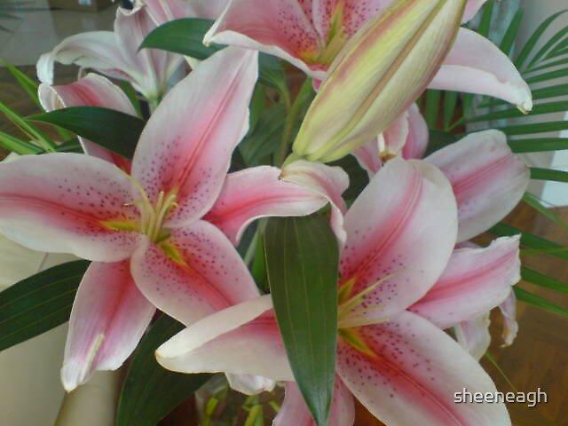 flowers by sheeneagh