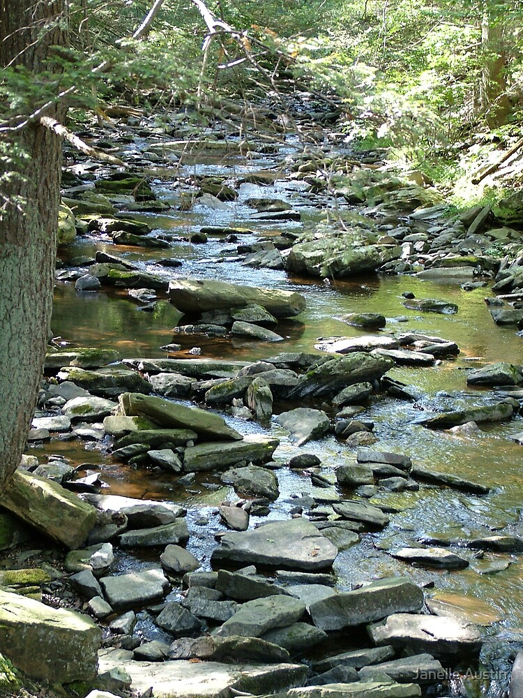 Catoctin Mountain Stream by Janelle Austin