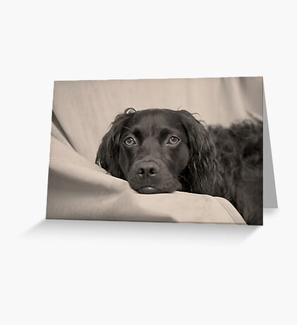 Can we please go home now? Greeting Card