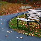 Bench on The Walk by Rick Morgan
