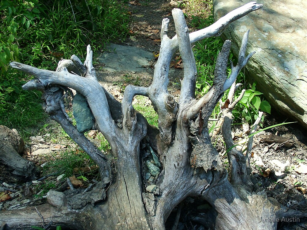 Tree Trunk Driftwood by Janelle Austin