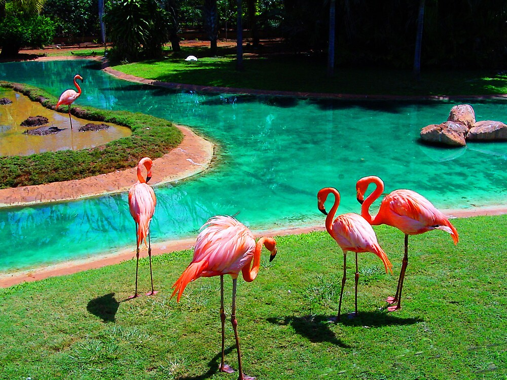 Zoo Flamingos by THConway