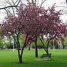 Spring Is In The Air by Teresa Zieba