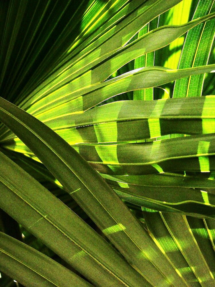 Fan Palm Display by Timothy Wilkendorf
