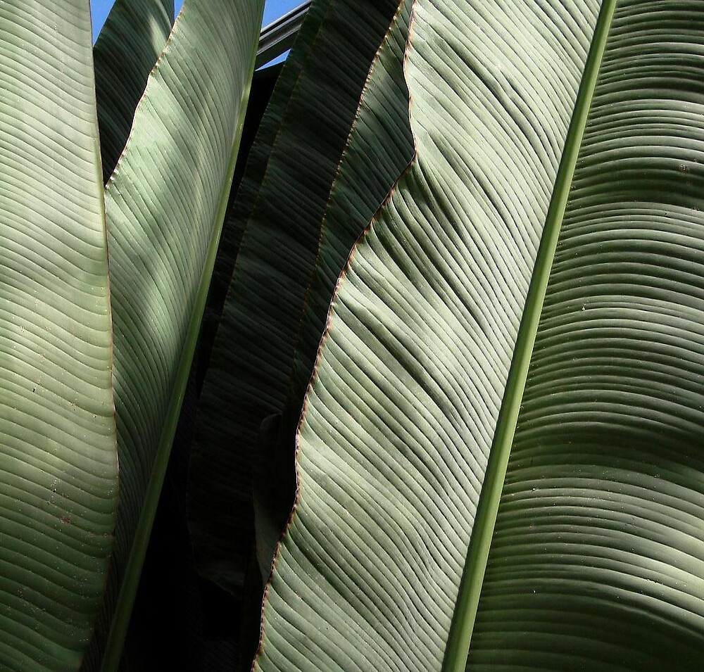 Giant Palms by Timothy Wilkendorf