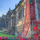 The Knitted poppies of the Thirsk Yarnbombers by Colin  Williams Photography