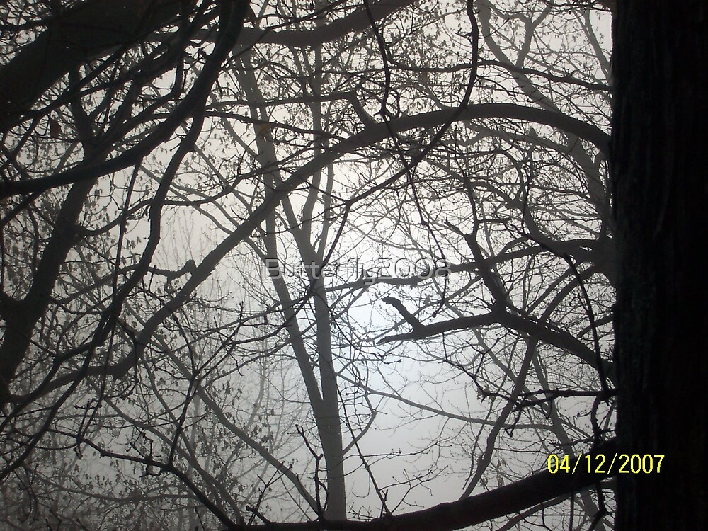 Foggy Tree by Butterfly2008