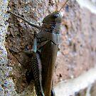 oh, grasshoppah by Andrew Hoisington