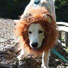 Casey the Golden lion puppy by jodi payne