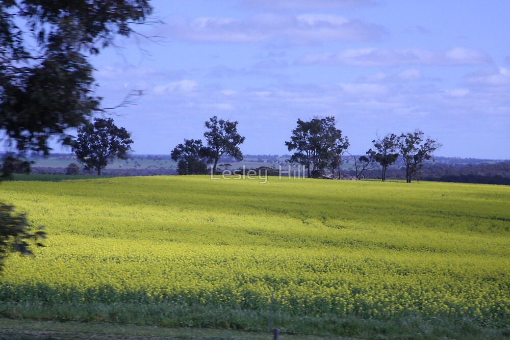 Fields of Gold by Lesley  Hill