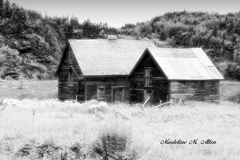 The Barns  by Madeline M  Allen