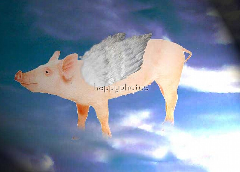 When pigs fly by happyphotos