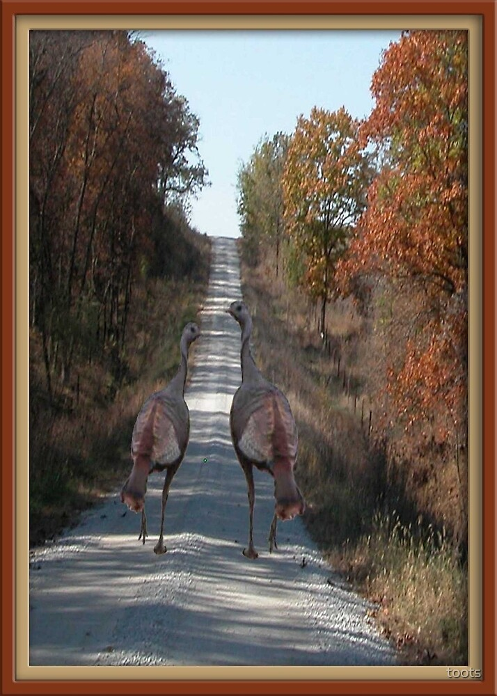 Two Turkey Adventure. by toots