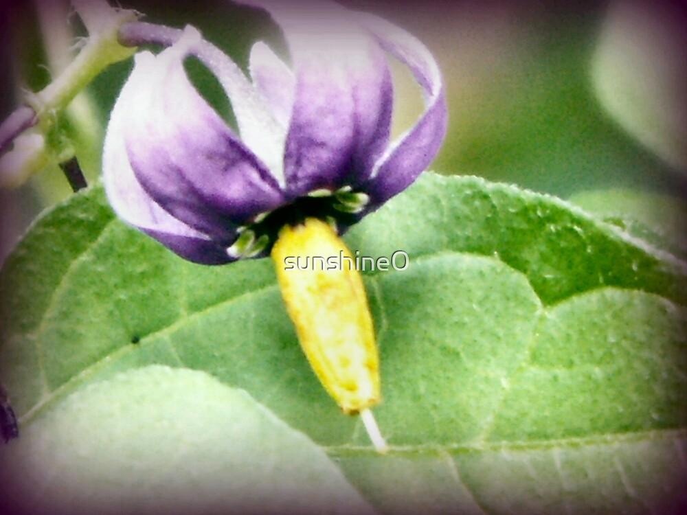 Tiny flower by sunshine0