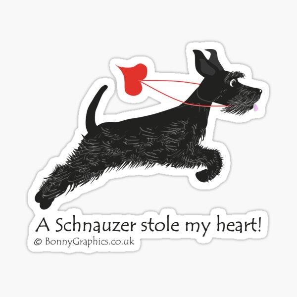 Un schnauzer robó mi corazón (negro) Pegatina