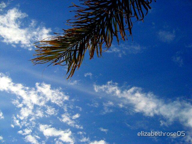 Palm by elizabethrose05