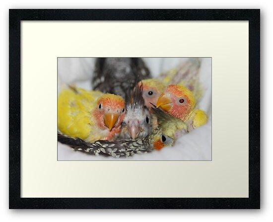 baby chicks by ZeeZeeshots