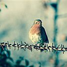 ROBIN ON THE WIRE by NICK COBURN PHILLIPS