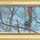 Bluejay in tree at winter time by toots