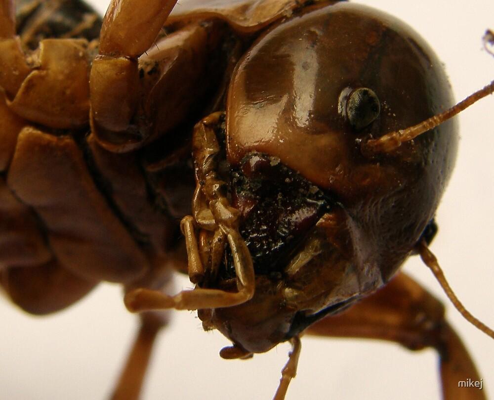 Really Big Bug by mikej