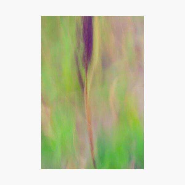 l'épi Photographic Print
