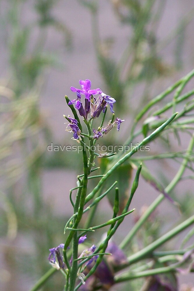 Small Purple Flower by davesphotographics