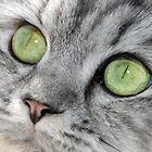 The Eyes Have It von Graham Taylor