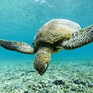 Turtle magic  by tracyleephoto
