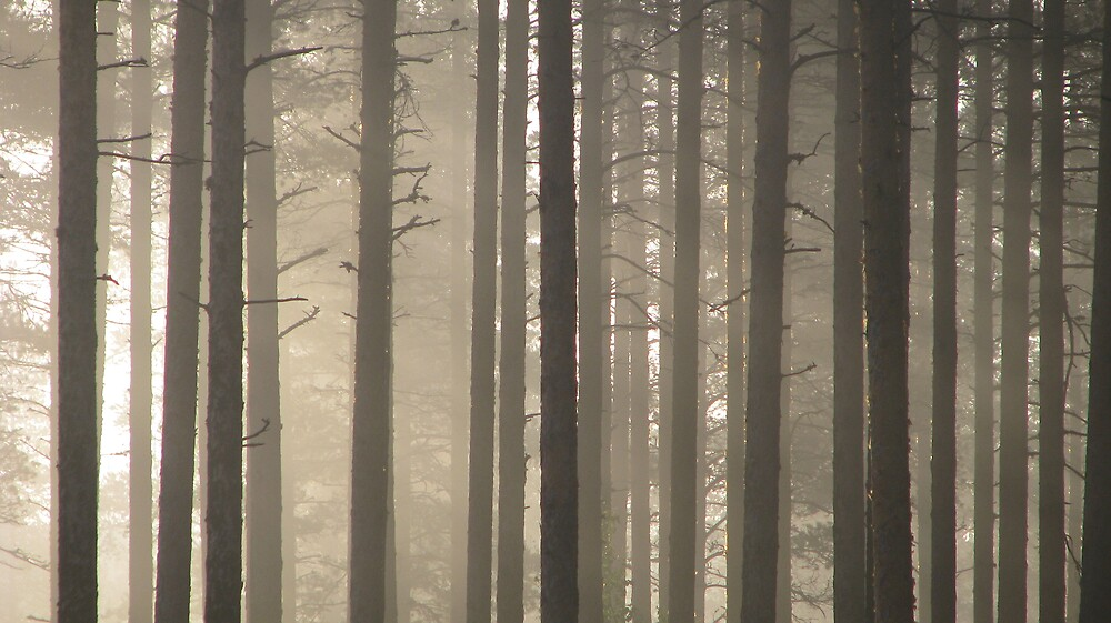 Fog in the Forest by Petri Volanen