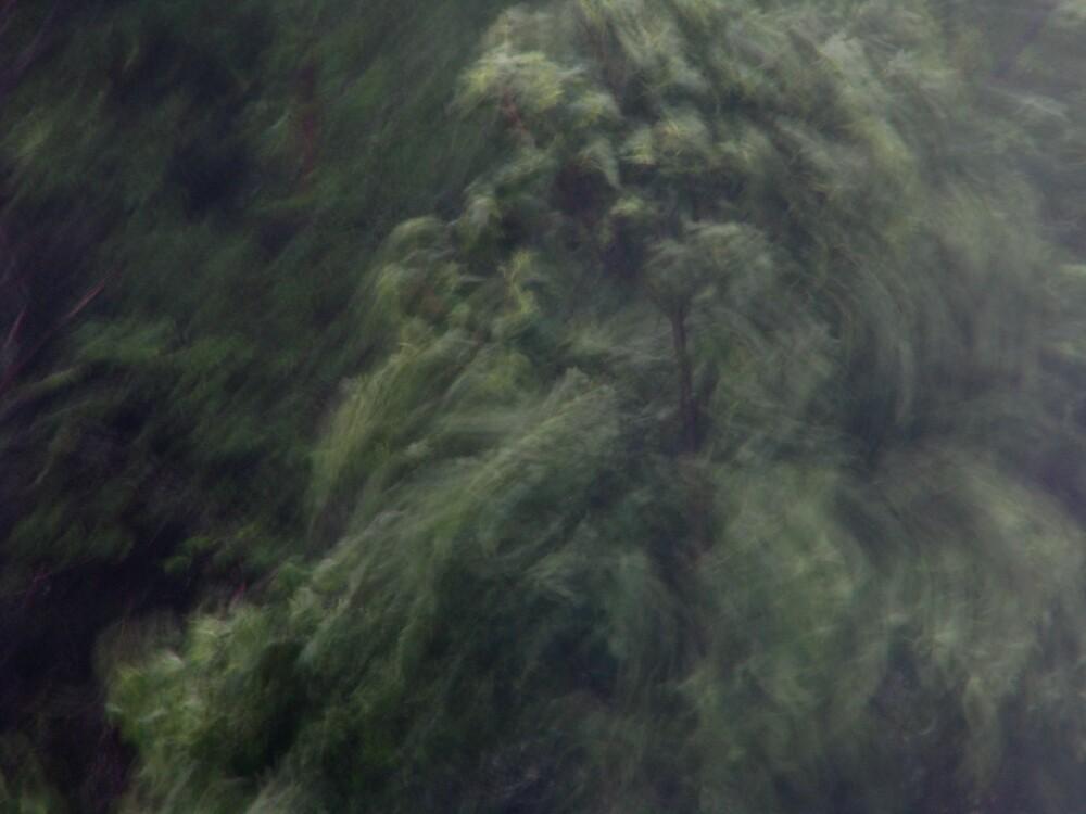 Storm by Petri Volanen