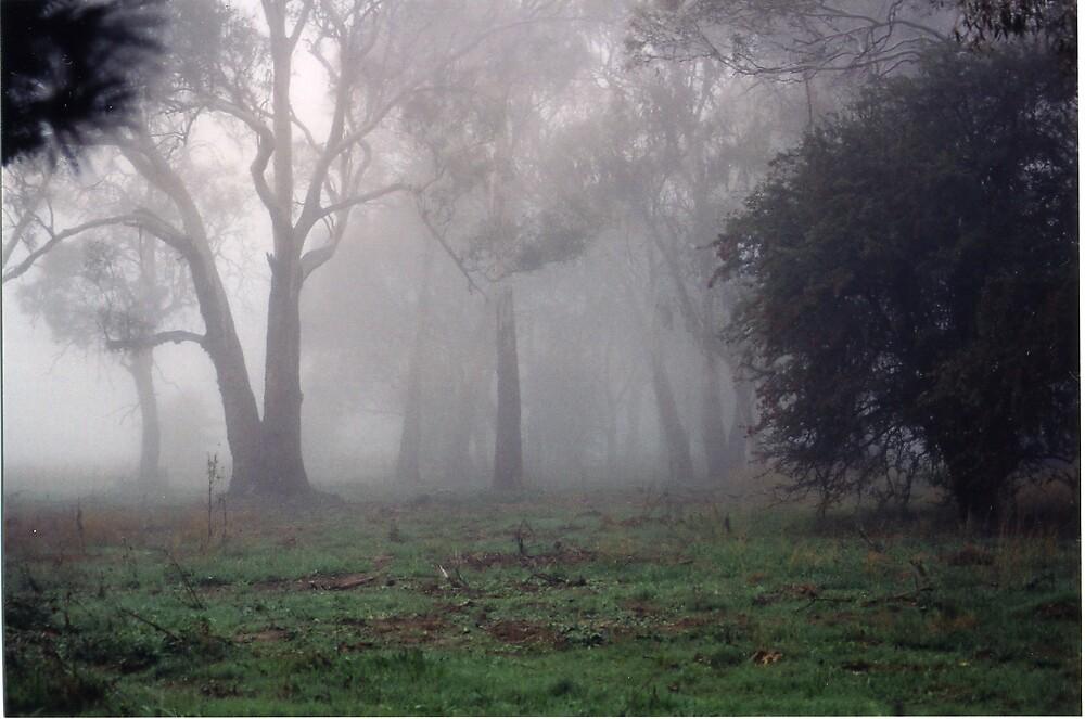 foggy landscape by yoevans