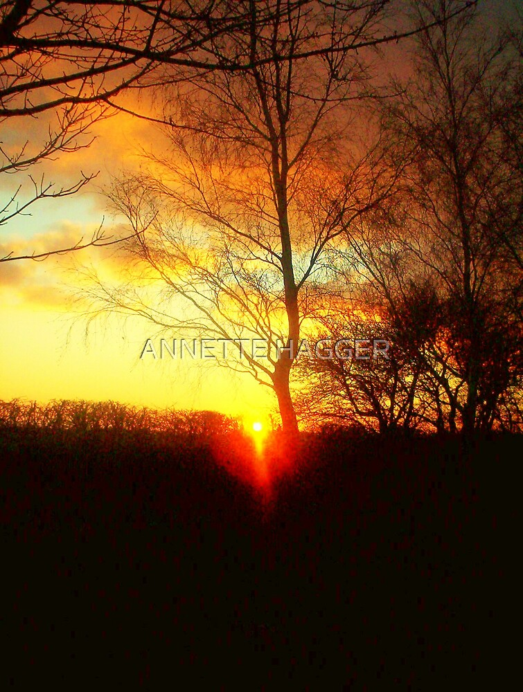 SUNSET 2 METFIELD by ANNETTE HAGGER