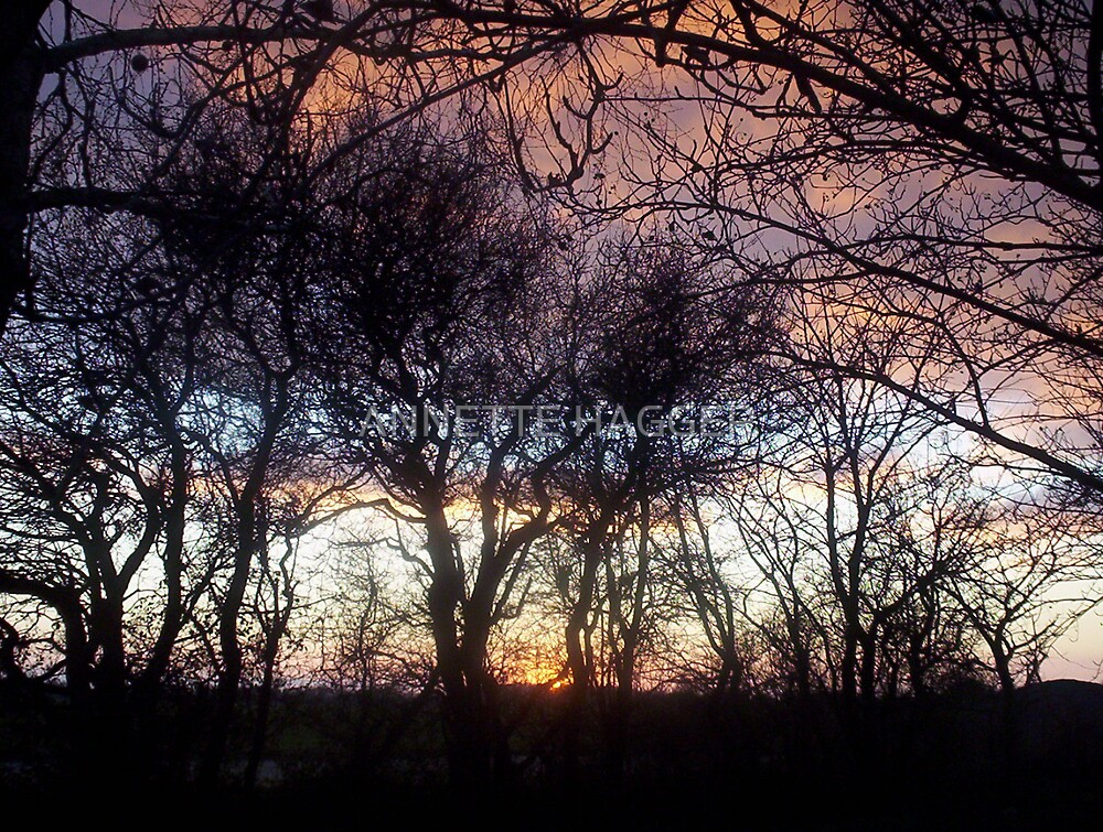 SUNSET 5 METFIELD by ANNETTE HAGGER