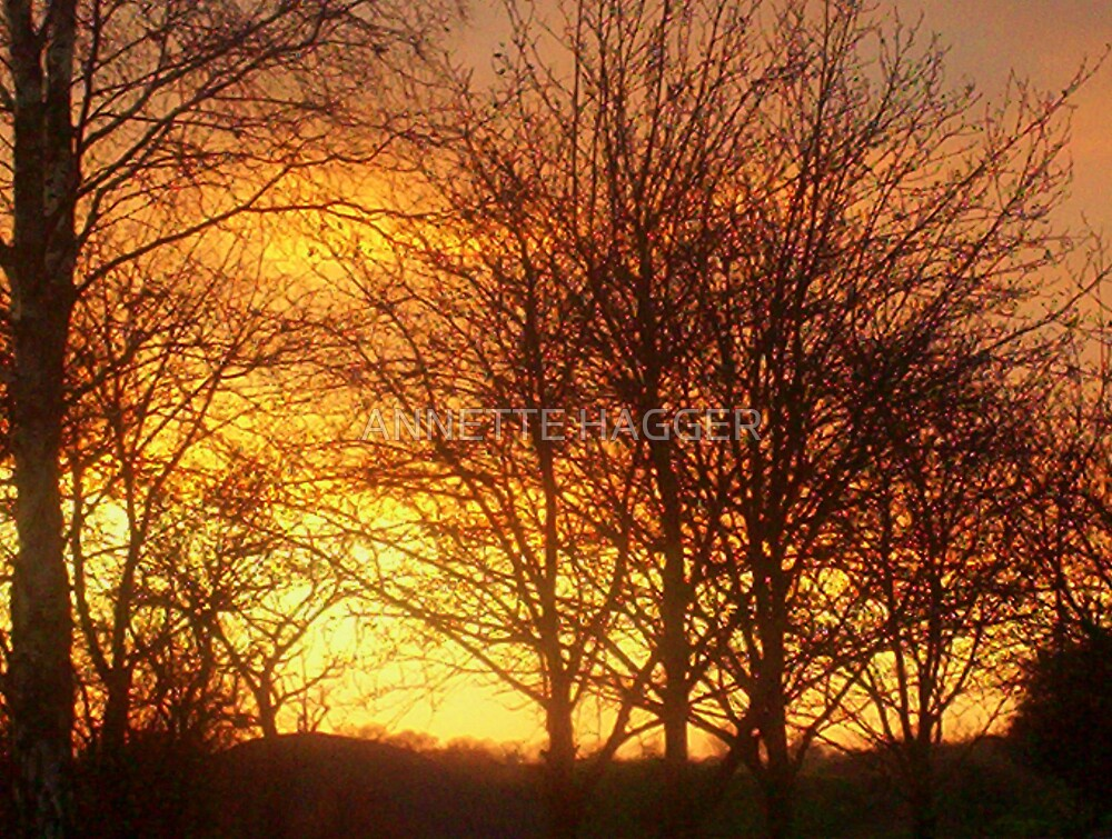 SUNSET 6b METFIELD by ANNETTE HAGGER