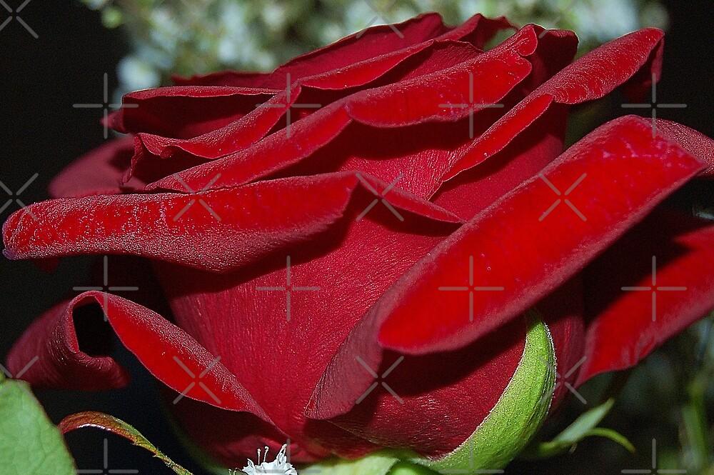 Underneath of rose by loiteke