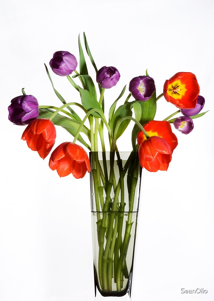 Tulips by SeanOlio