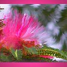 mimosa dream by budrfli