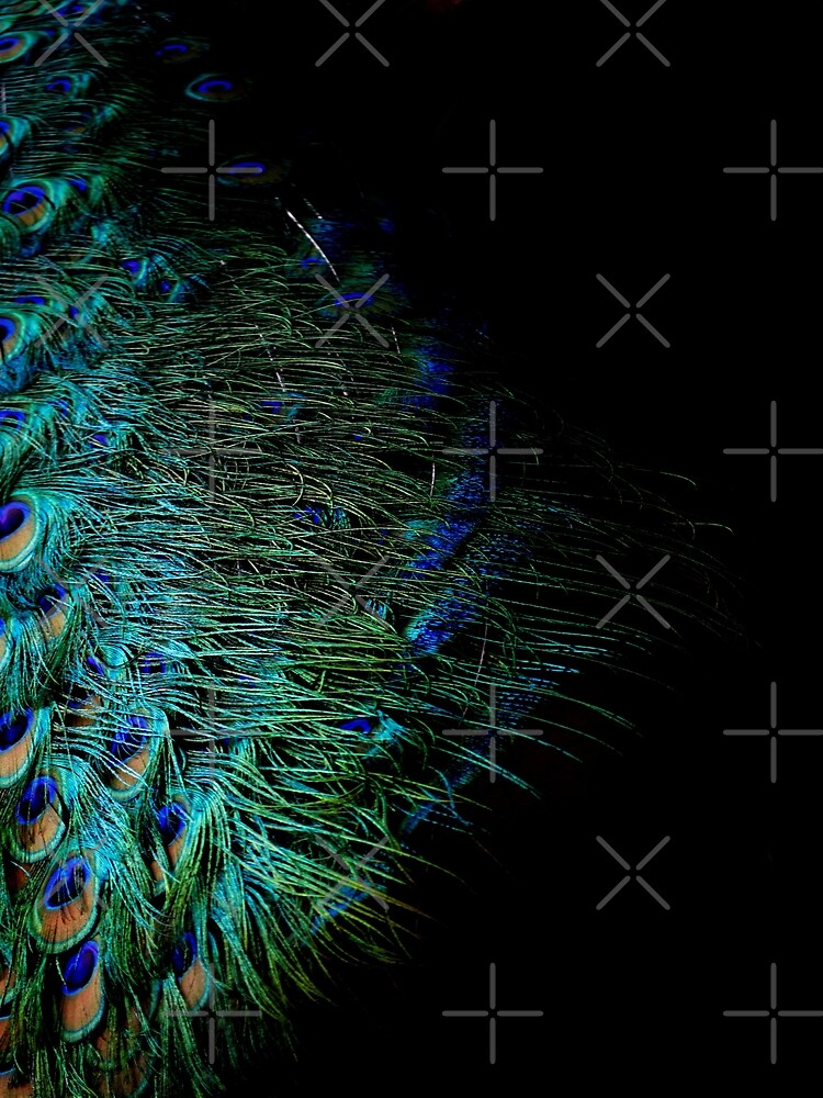 Peacock Feather by by-jwp