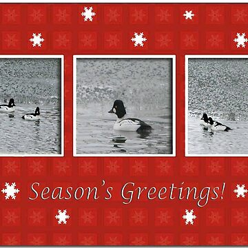 Goldeneye Trio in Red Snowflake Frame, Season's Greetings by toots
