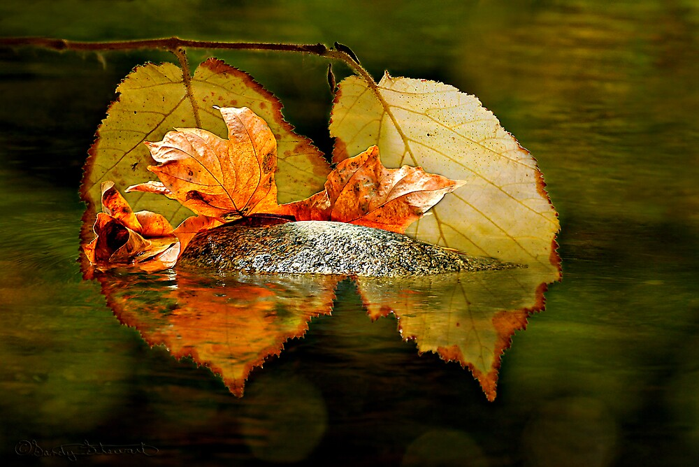 AUTUMN by Sandy Hill