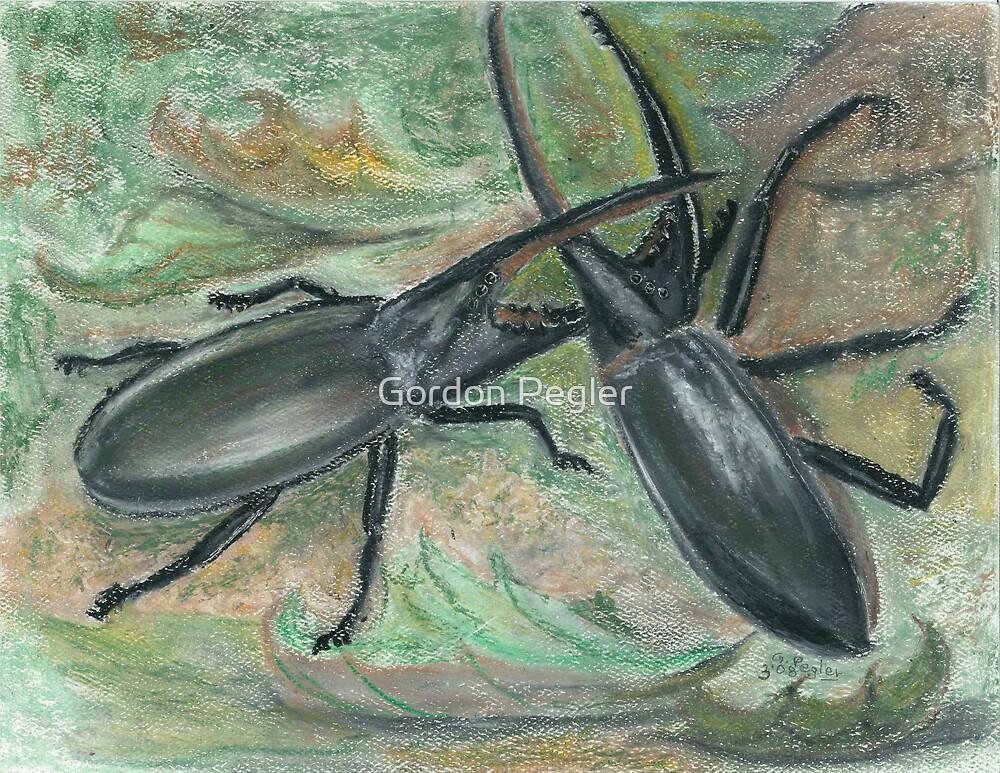 Male Hurcules beetles in territorial battle(rainforrest of Madagascar) by Gordon Pegler