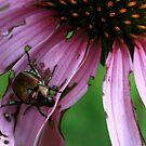 beetle by Danielle  Kay