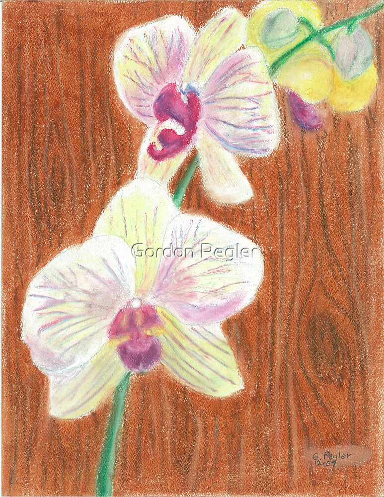 Phalaenopsis Orchid by Gordon Pegler